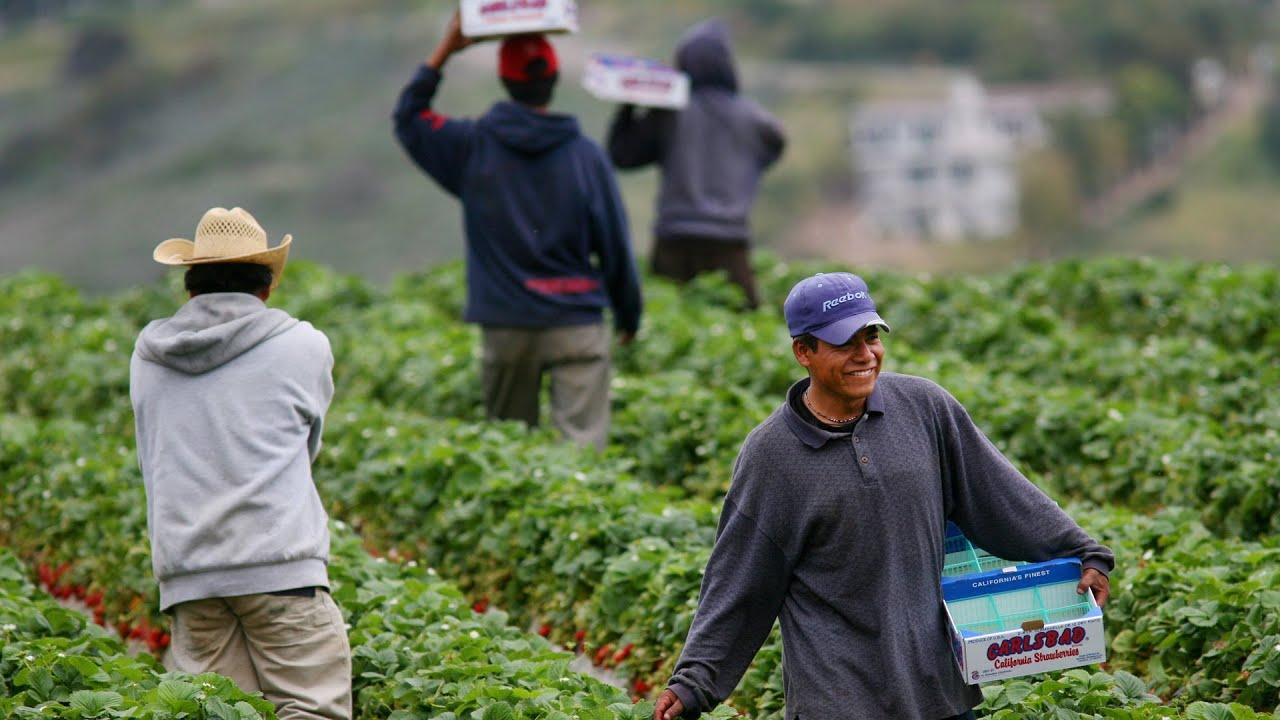 Empresas agrícolas diseñan planes de acción para proteger a trabajadores del campo