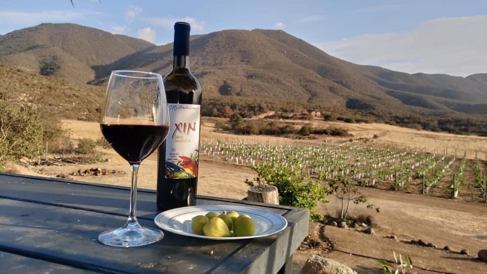 """La famosa """"Ruta del Vino"""", el turismo enológico más famoso del México"""